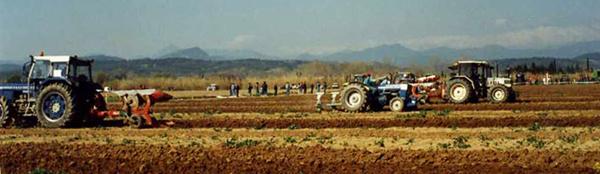 Campionat arada (1995)